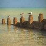 gulls after bright