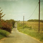 Vine Road